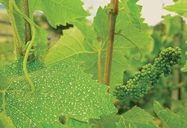 Waipara Wines